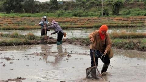 pict-collecting tadpoles.jpg